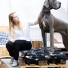 Hondenoppas in Berchem (2600) - Nathalie