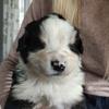 Hondenoppas in Nijlen (2560) - Lieselotte