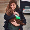 Hondenoppas in Berchem (2600) - Joke